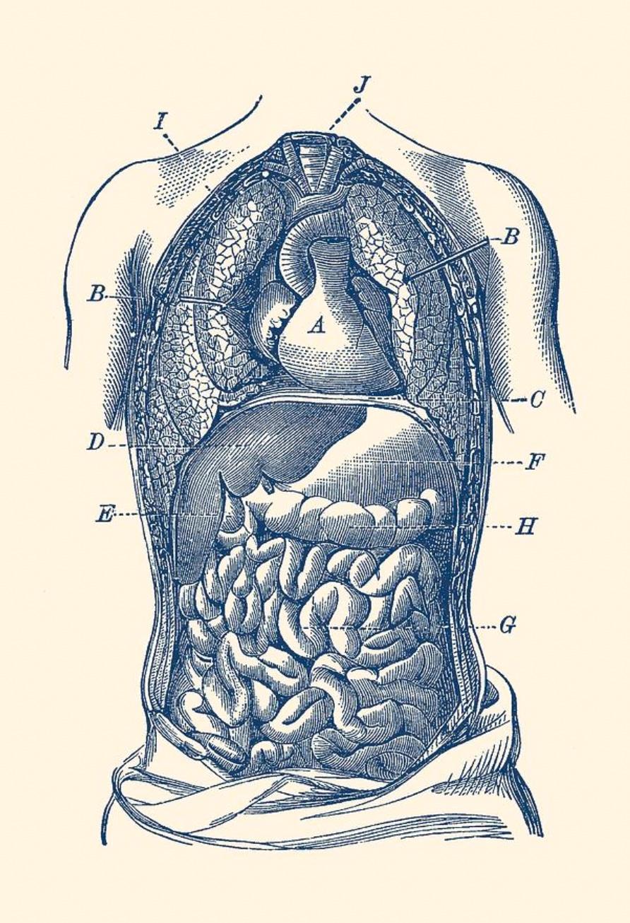 microbiote levain